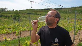 """Weinprobe """"Basic-Weissweine"""" Teil 3 Rivaner vom Bio Weingut Schaffner Kaiserstuhl"""