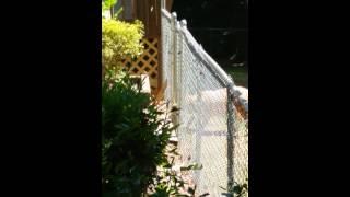 Layla The Dog Master Escape Artist! You Will Be Su