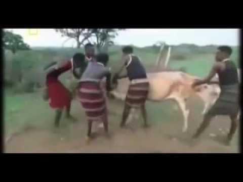 Племена африки видео брачьные секс