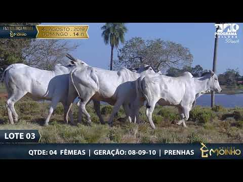LOTE 3