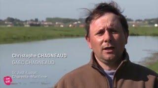 Le Gaec Chagneaud - Le Bonsens