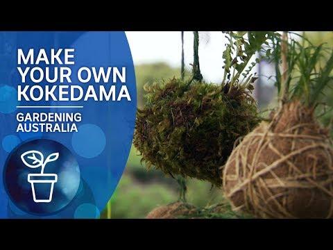 Make A Kokedama - Moss Hanging Pots