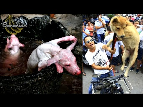Inside the Yulin Dog Meat Festival