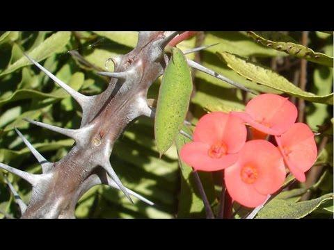 Curso Dinâmicas para Motivação e Cooperação de Equipes nas Empresas - A Flor e os Espinhos