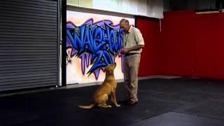 Ashdale Dog Training : Billy Plenderleith : Break Off And Recall Training : Lrrss
