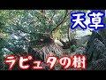 天草のラピュタ【NC750Xモトブログ】世界遺産・崎津集落