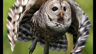 Нападения птиц на людей