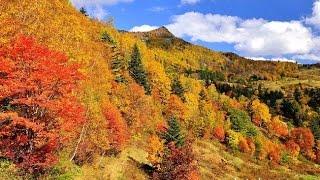 信州高山村の山田牧場の周辺は紅葉が綺麗な事で最近は県外からも大勢の...