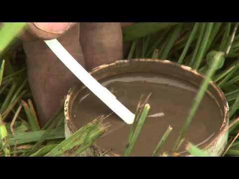 Soil Nitrogen Testing