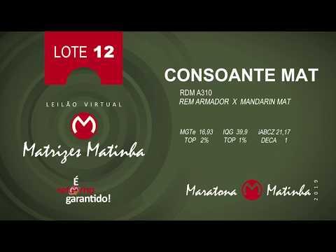 LOTE 12 Matrizes Matinha 2019