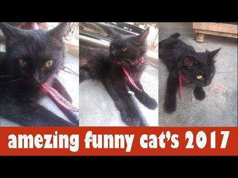 amezing funny cat's 2017