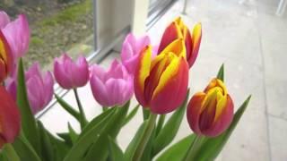 冬の松江イングリッシュガーデン。 ガーデンを彩るのはスノードロップや...