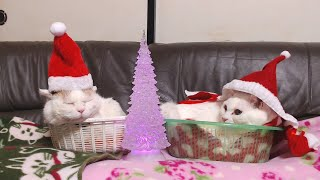 かご猫クリスマス