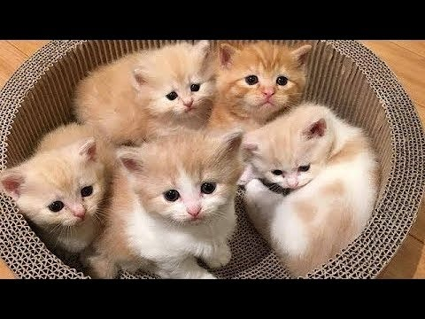 So many cute kittens and funny cats compilation 2018