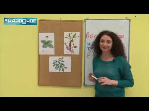 Вопрос: Где собирать бруснику в Мурманске и области Какие брусничные места?