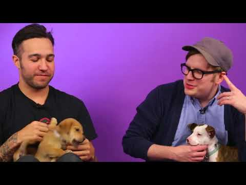 Fall Out Boy ~ CRACK #11 (ft. Brendon Urie)
