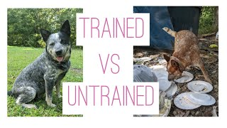 Well trained vs untrained dog