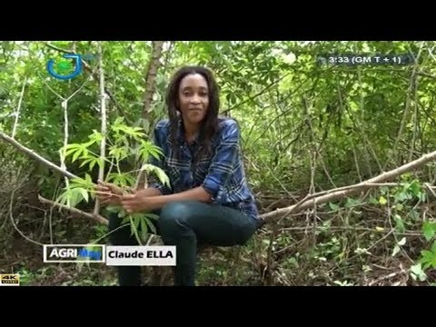 AGRI-MAG - (CULTURE et TRANSFORMATION du MANIOC au CAMEROUN) - Dimanche 25 Mars 2018 - Claude ELLA