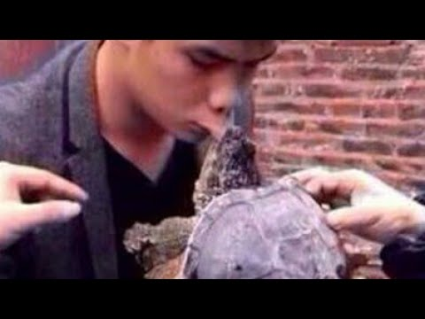 Turtle Attack People :Top 7 Turtle Bite People Caught On Camera In 2020