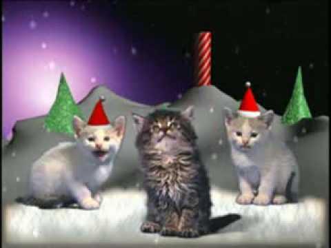 Weihnachtsmusik mit  Katzen
