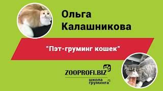 Ольга Калашникова. Стрижка кошки. Мастер класс Пэт груминг кошек.