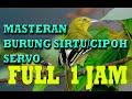 Masteran Sirtu Super Gacor Langsung Nyiul Dan Pikatan Sirtu Ngalas(.mp3 .mp4) Mp3 - Mp4 Download