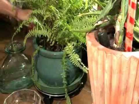 irrigazione automatica blumat per le piante in vaso 12500