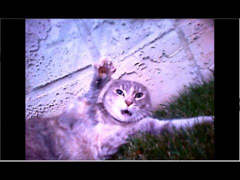 Epic Cat Fight Caught On Cat Collar Cam