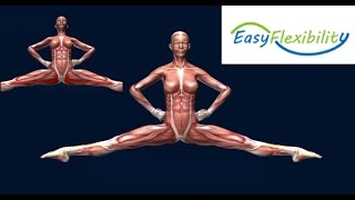 How to Highland Leap Scottish Dancing Muscle Animation EasyFlexibility
