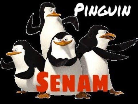Ayo Senam Sehat Gembira | Senam Anak Playgroup, Paud, TK, dan SD | Pinguin senam