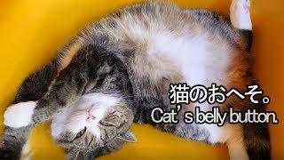 まるのおへそ-maru-s-belly-button