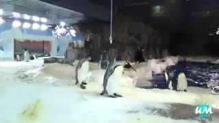 ►►  Смешные моменты из жизни пингвинов