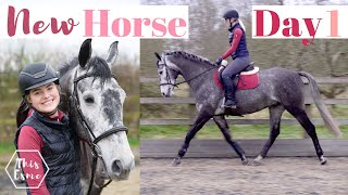 First Day with my NEW HORSE Joey | This Esme