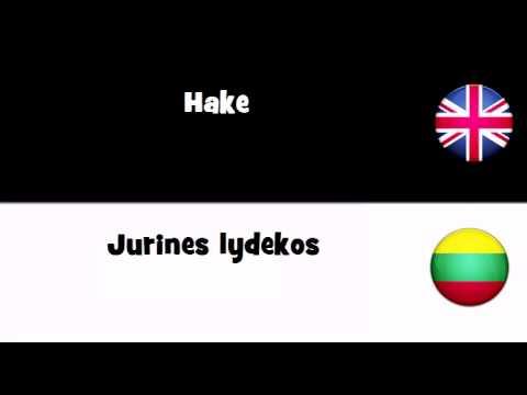 TRANSLATE IN 20 LANGUAGES = Hake