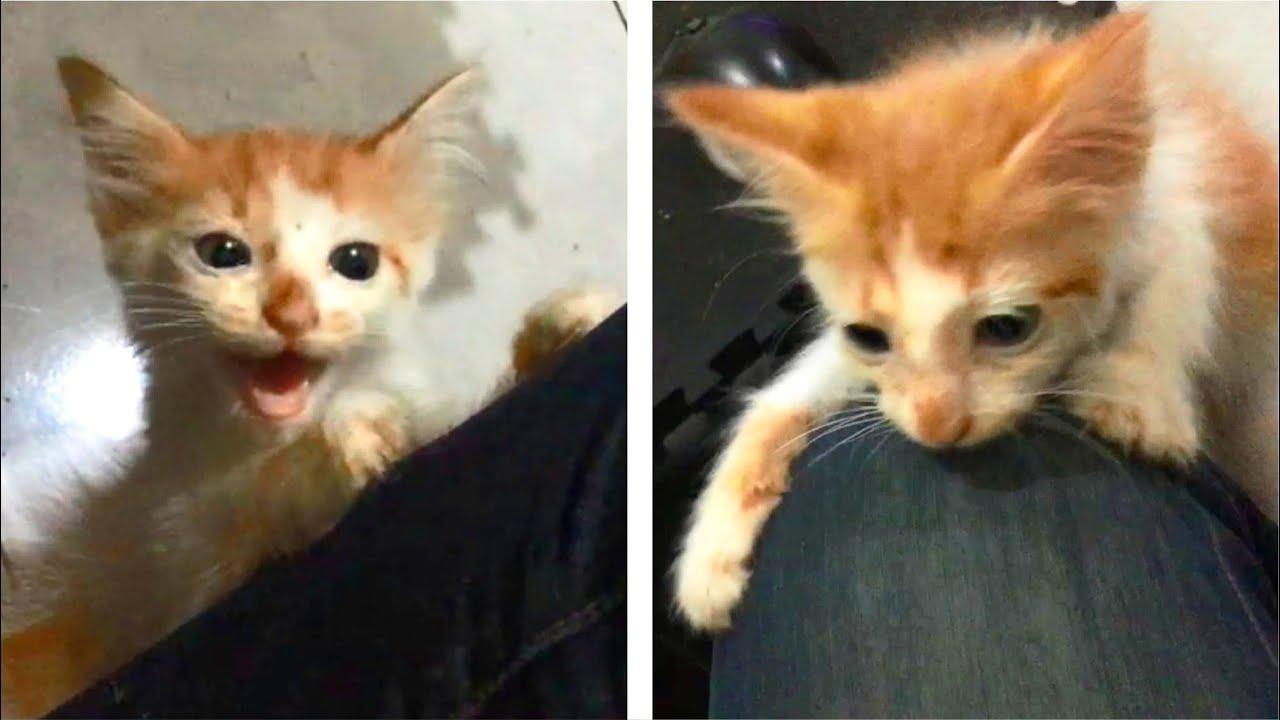 Cute Kitten Climbing On Me