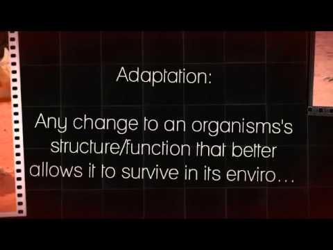 Bio Adaptations Assignment - Thorny Devil
