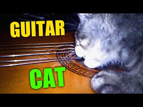 CAT PLAYING GUITAR