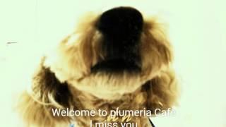Okinawa 沖縄 Poodle  Welcome To Plumeria Cafe  A Lon