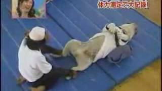 Monkey, Dog and Children doing situps