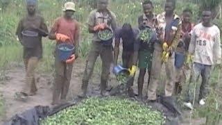 Agriculture: la culture du gombo source de revenus pour les fe…