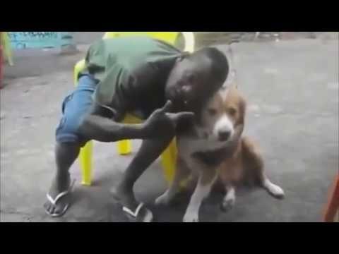 cachorro mil grau    com  tradutor de