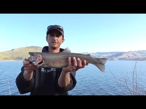Monster Steelhead Fishing In Cayucos, California