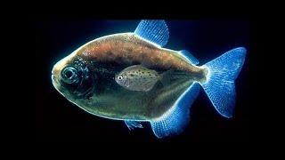 Самые Странные в Мире Животные   Чудаки в Океане  Документальный Фильм National Geographic #211
