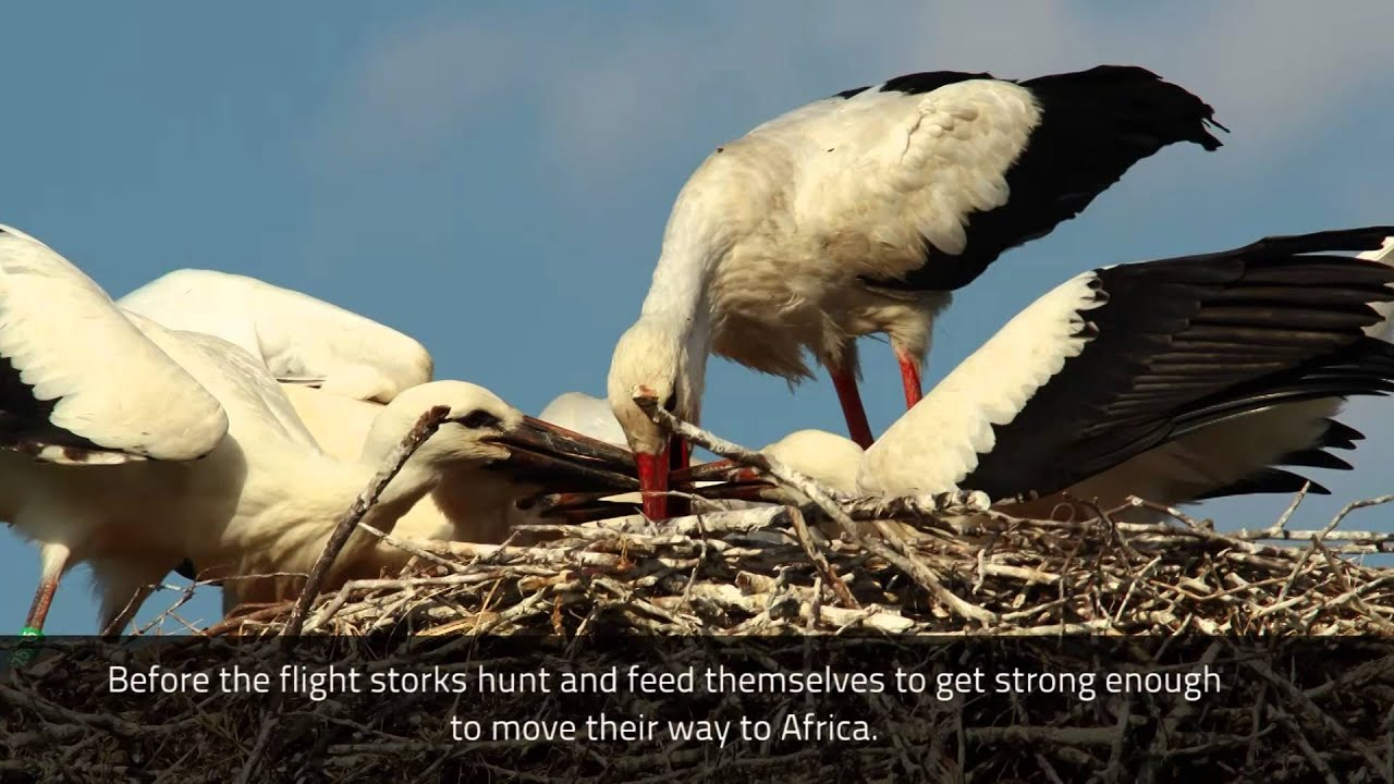 Raport randkowy ibis