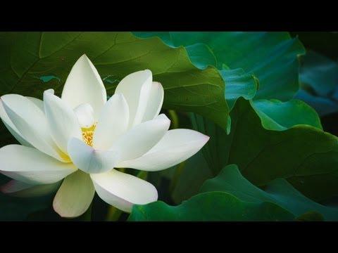Book of Seasons - A year in Kanazawa (Full Documentary)