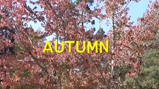 LEARN ENGLISH AUTUMN WORDS VOCABULARY For KIDS