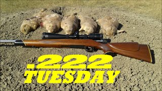 222 REM. PRAIRIE DOGGEN. 250-450+ yards.