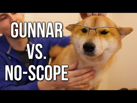 Gunnar vs. No-Scope: Gaming Glasses Review (w/ Bumi The Deaf Shiba)