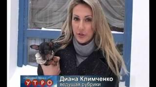 Русский той терьер/ Krievu tojs