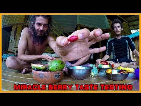 "THE INCREDIBLE ""MIRACLE BERRY"" 